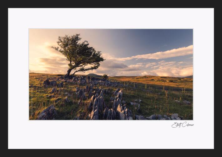 Ystradfellte Loan Tree - Fine Art Print